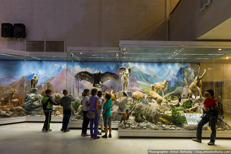 Государственный Дарвиновский музей