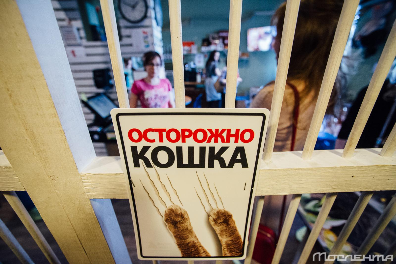 Котики и люди. Что такое котокафе?