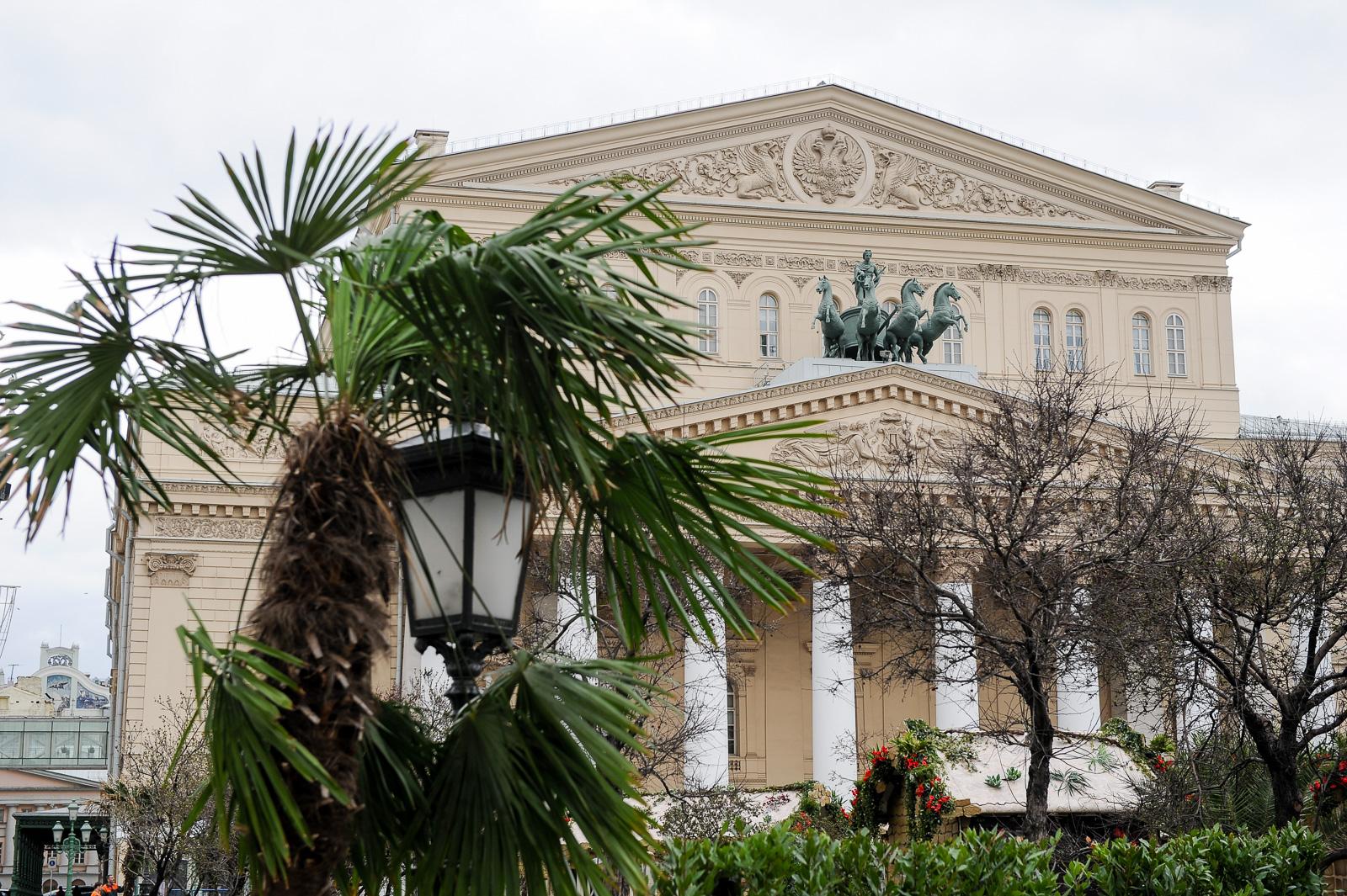 Пальмы у Большого театра